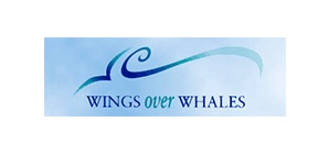 wings-whales
